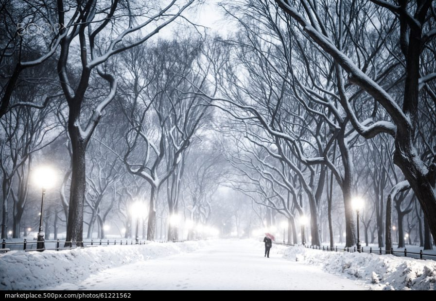 500px Photo ID: 61221562 - The Mall and Literary Walk in Central Park.